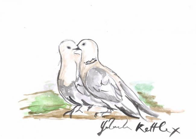 A doodle of a pair of Turtle Doves by actress Yolanda Kettle