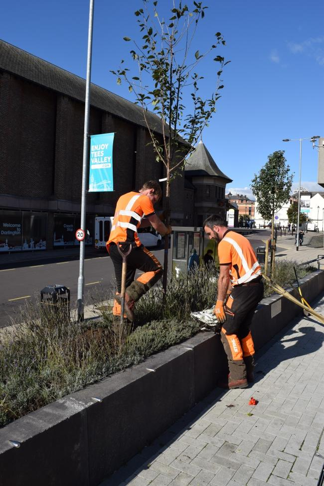 Trees being planted outside the council offices in the town centre
