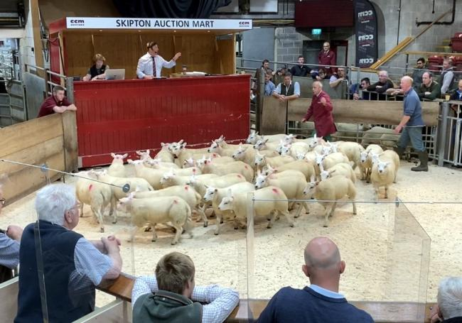 Andrew Haggas is pictured right in the Skipton sale ring with his £95 per head store lambs at Skipton Auction Mart's opening sale