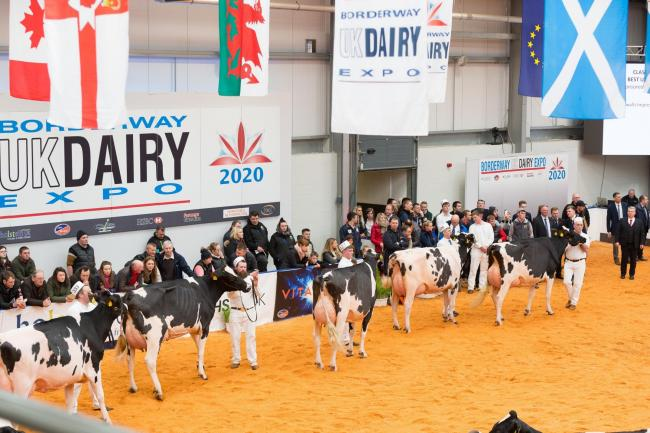 Judging at one of the Dairy Expo classes earlier in the year