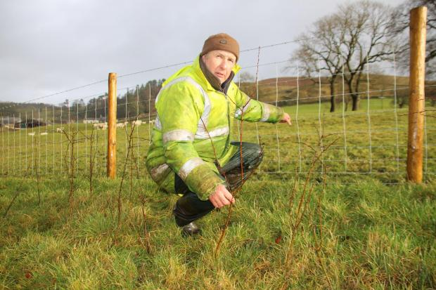 Craven farmer Anthony Bradley has been planting hedges to join up important habitats