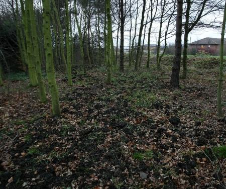 A thick layer of pig manure has been spread in woodland between Willowbank and Stainton Way, in Coulby Newham, Middlesbrough, to keep out anti-social youths