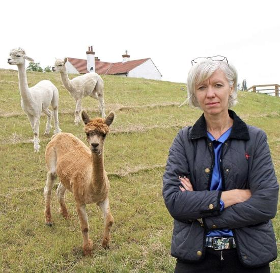 DRASTIC MEASURE: Alpacas graze on the flood-defence mound in Angela Whitlock's garden