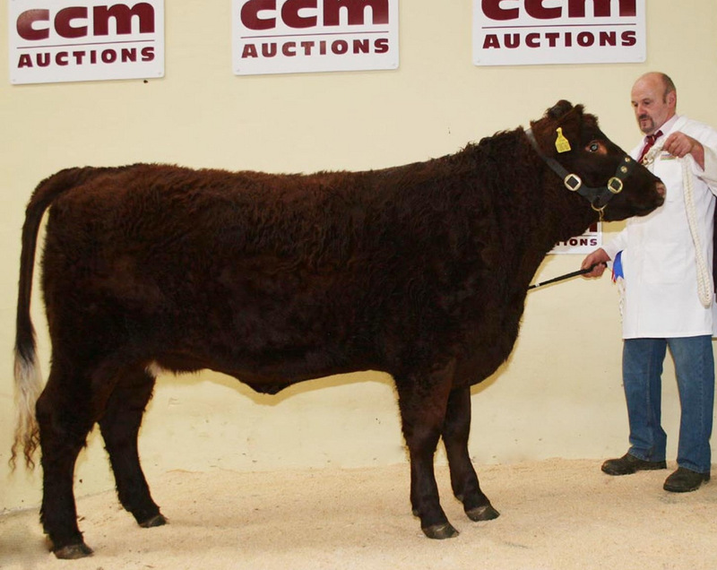 BEEFY: Champion, Tessa X767 made 3,100gns
