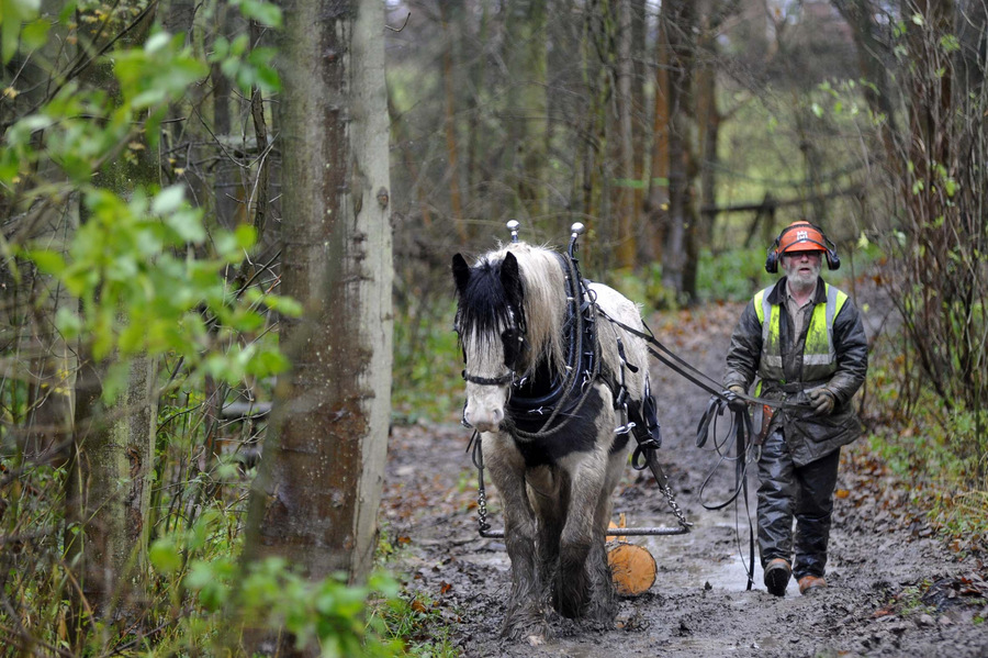 PARTNERSHIP: Blue, the apprentice horse logger, with owner Chris Wadsworth