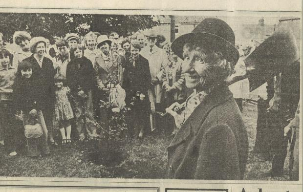Darlington and Stockton Times: CENTENARY CELEBRATIONS: From the Northern Echo in 1978, Jane Liddle plants a tree on Cockfield green to mark her 100th birthday.