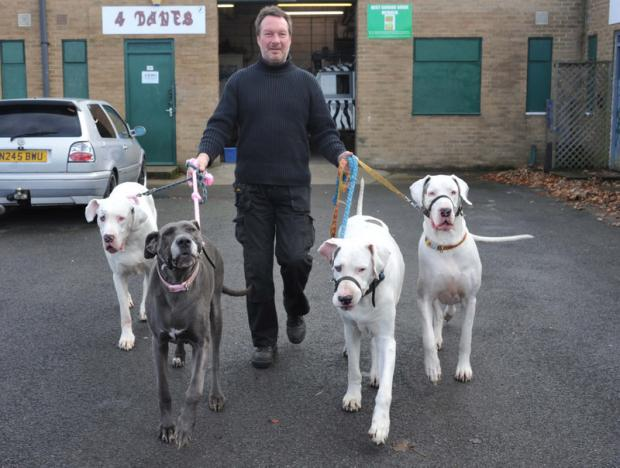 CANINE INSPIRATION: Andrew Smith with his pet Great Danes, Duke, Mhia, Soma and Lily
