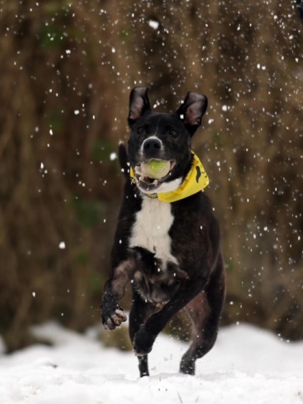 Buster in the snow Pic: Ross Parry