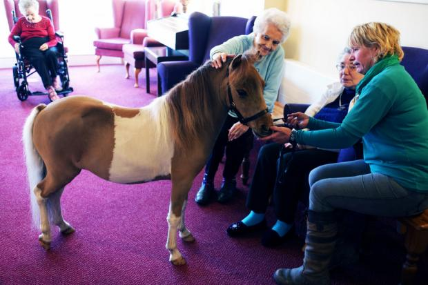 BRINGING SMILES: From the right, Katy Smith introduces Mr P to residents Dot Hogan and Evelyn Craggs during a visit to North Park care home in Darlington