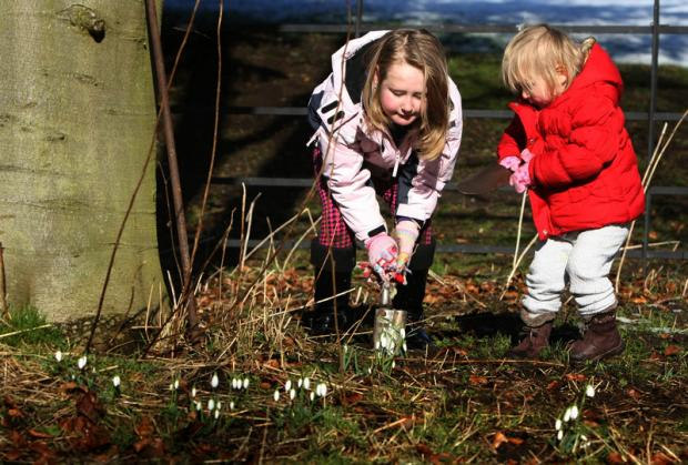 FOR LIBBY: Beth Armstrong, seven, and her sister, Daisy, two, from Long Newton, near Stockton, plant snowdrops in memory of their sister, Libby, at the annual Child Bereavment UK snowdrop walk in Hardwick Park, Sedgefield