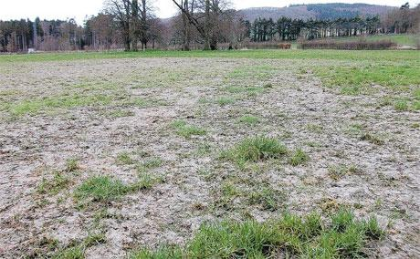 WINTER DAMAGE: many grass leys will need over-seeding this spring