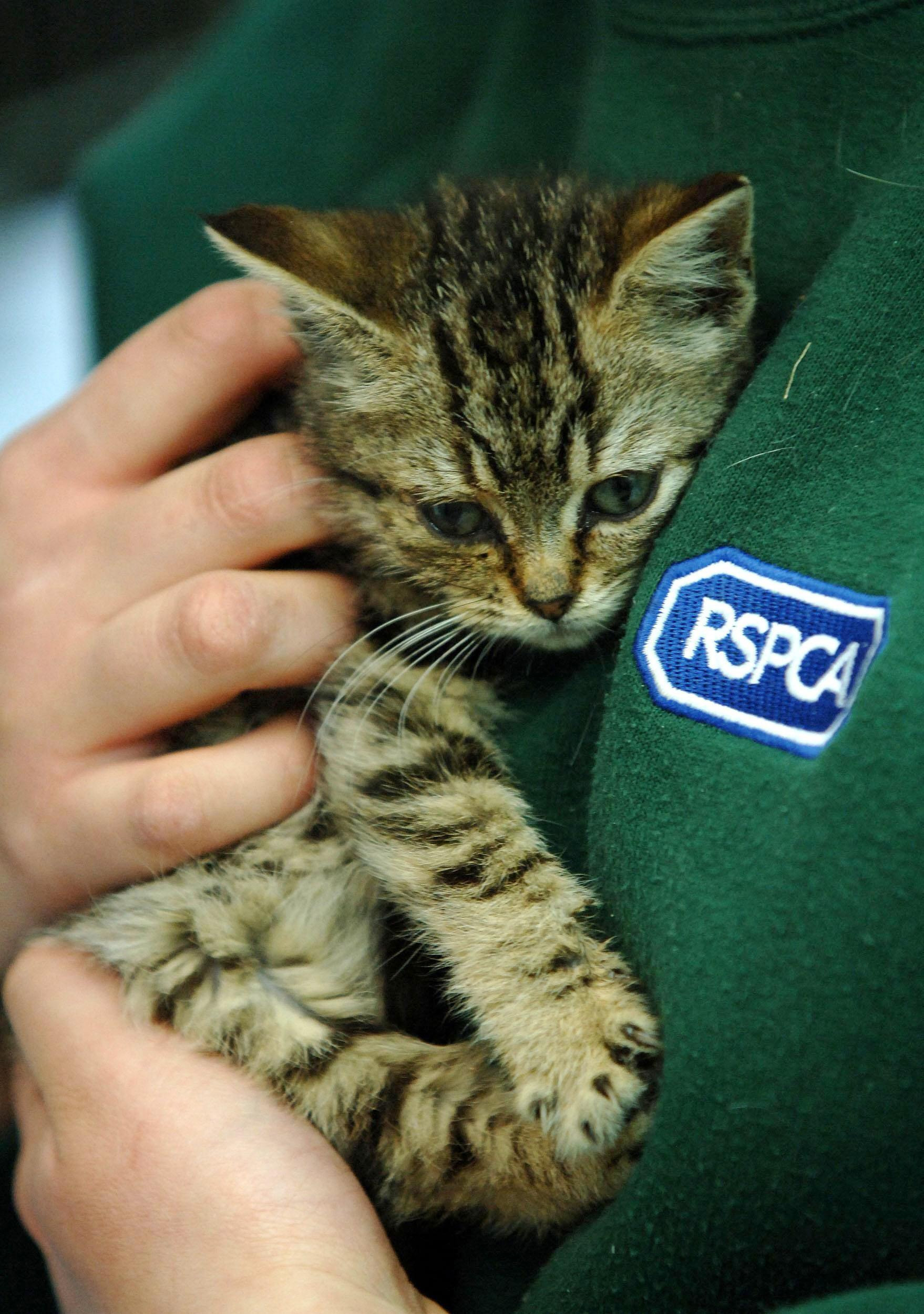 APPEAL FOR HELP: An abandoned kitten with an RSPCA officer