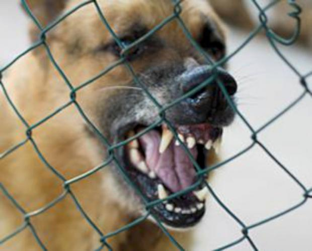 BITING BACK: Parts of the North-East have been named dog-bite injury blackspots