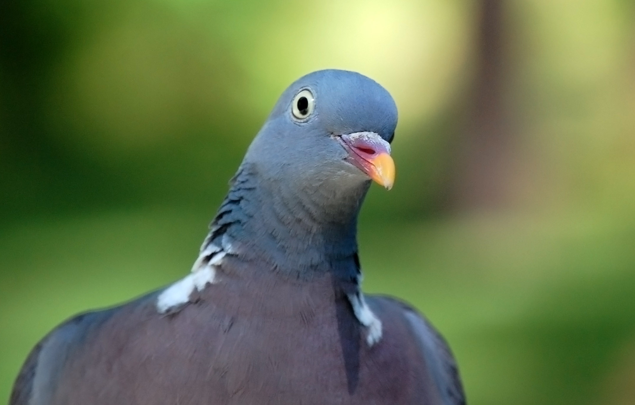 Police appeal after pigeons killed in