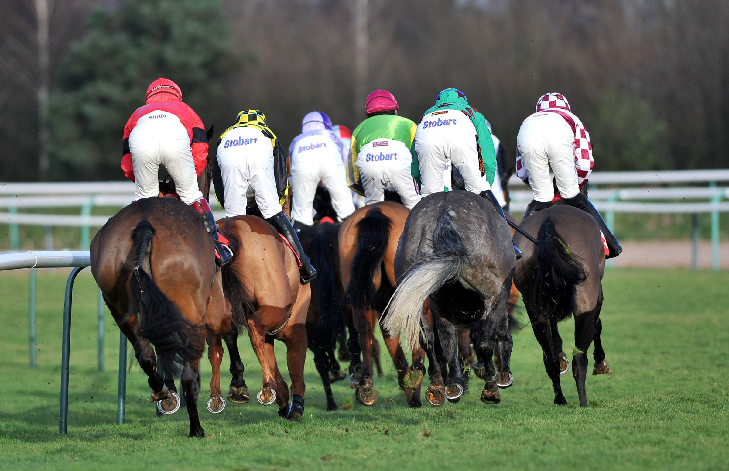 REAR ELEVATION: Runners and riders during The Your Favourite Pool Bets At totepool.com Novices' Hurdle at Southwell