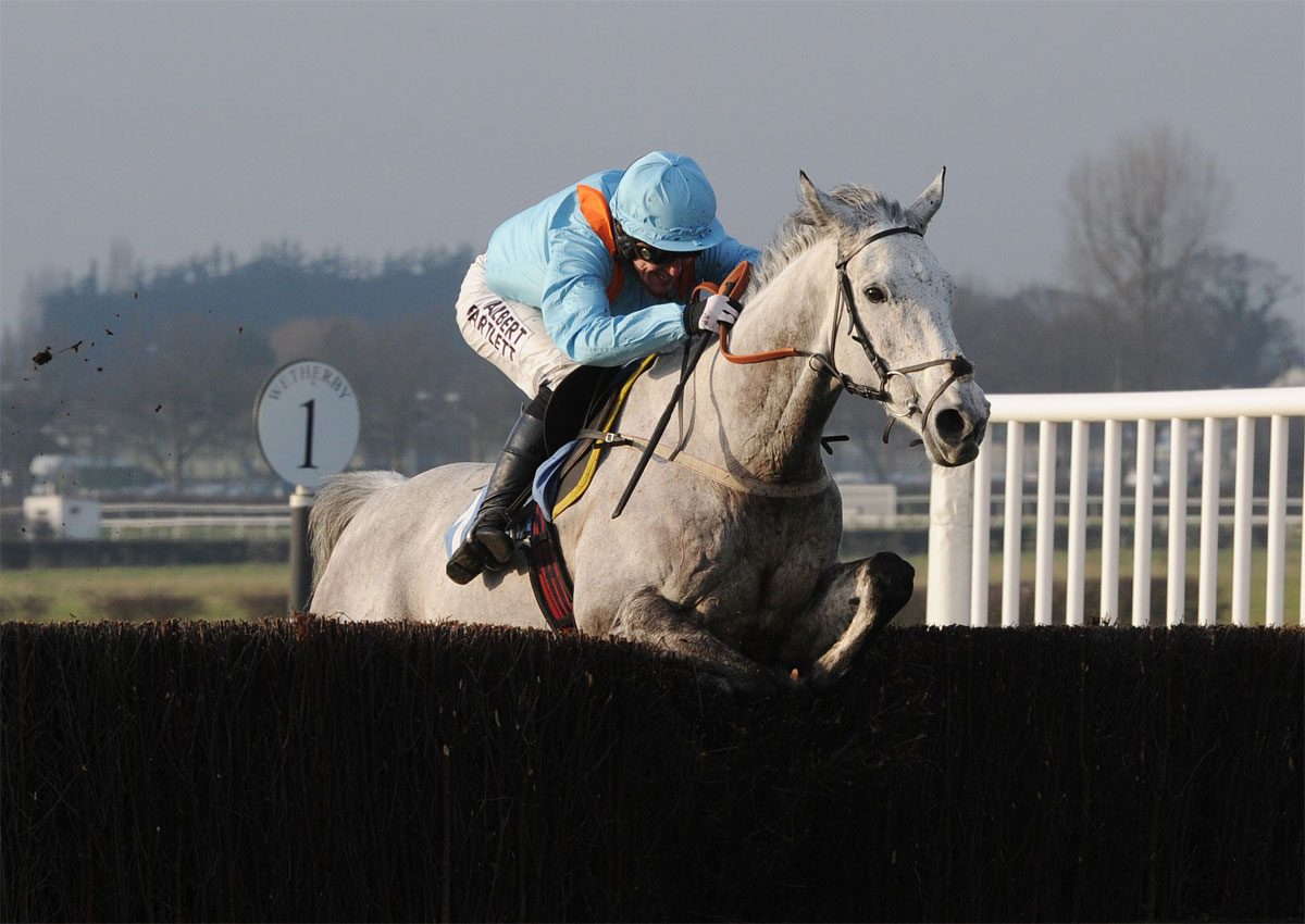 AT HOME AT WETHERBY: Rose Of The Moon being led to victory on Tuesday