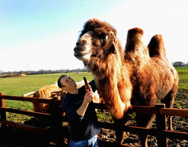 Darlington and Stockton Times: Jeffrey the camel with owner Simon Griffiths
