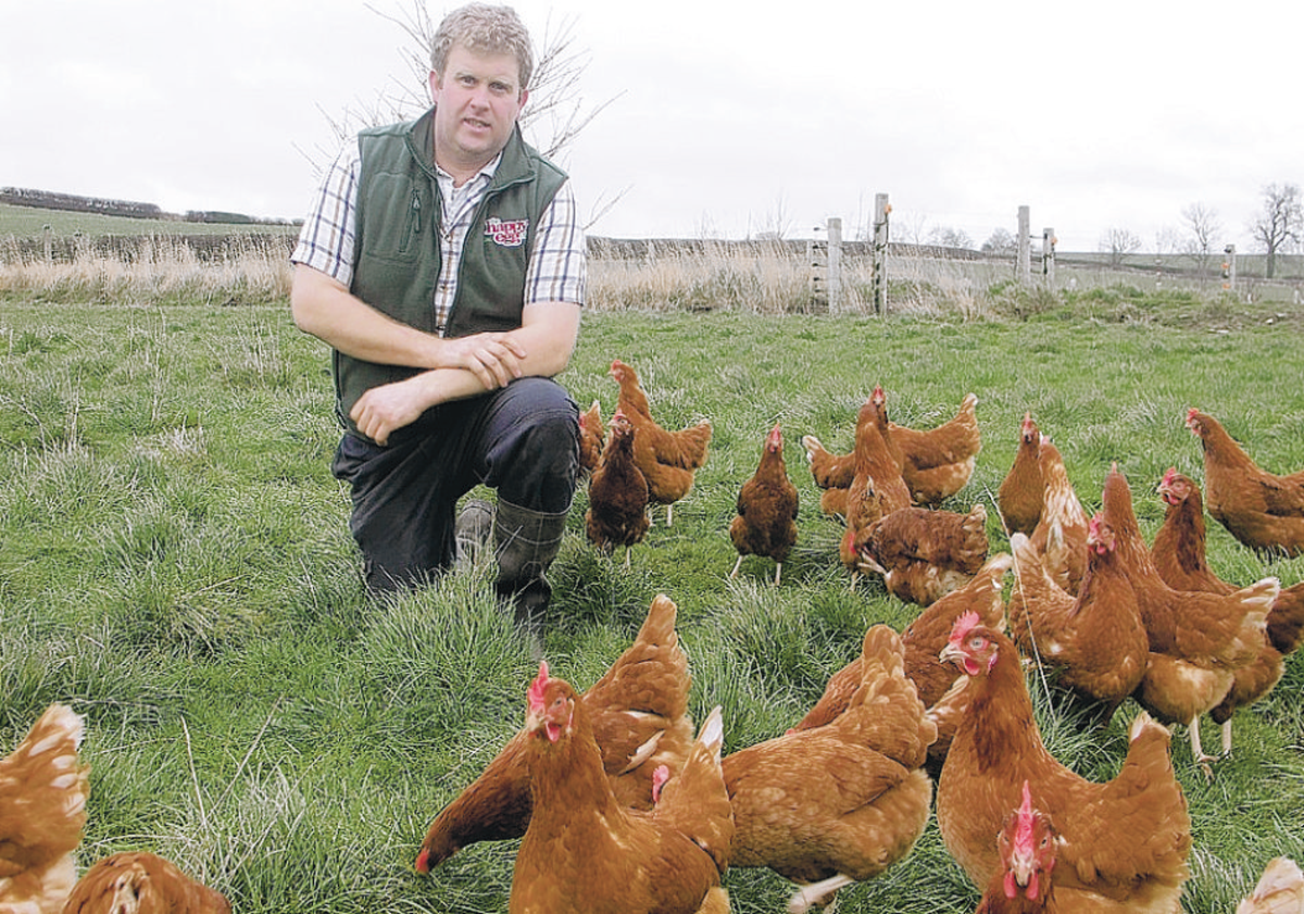 GOOD LIFE: William Maughan and some of his Bovan Brown hens enjoying the outdoors – Pictures: Mike Bridgen