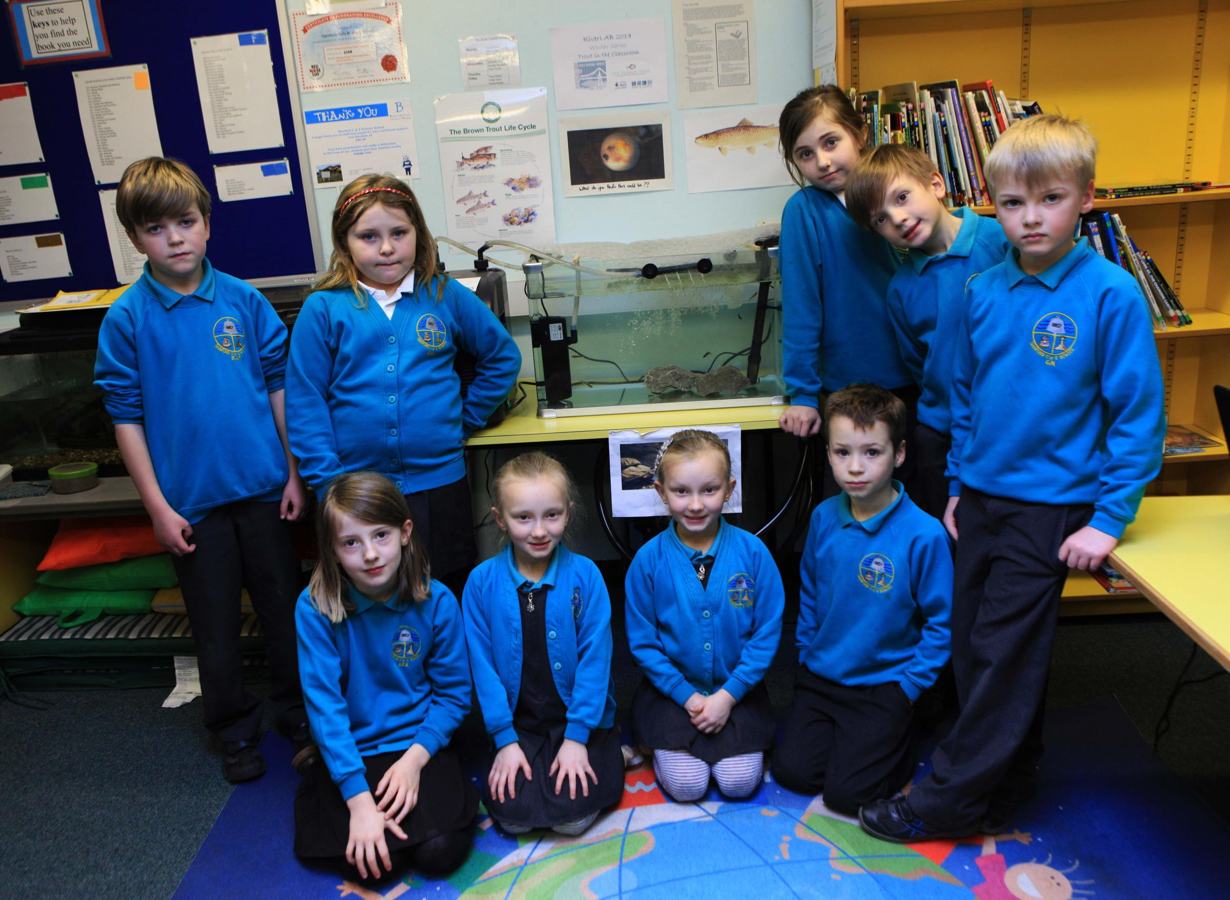 Children at Gainford C of E Primary School are looking after 24 brown trout which they will release into the River Tees