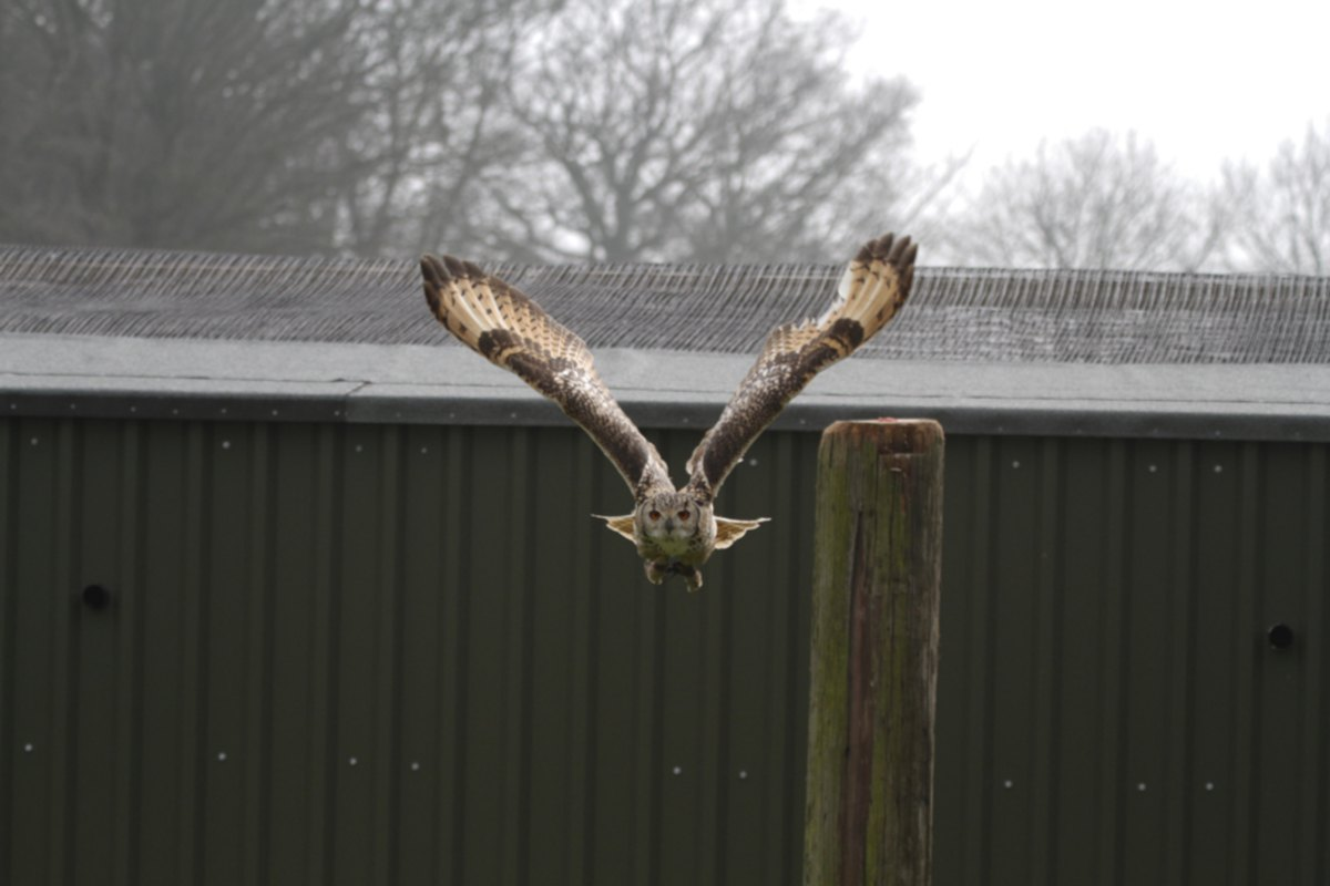 ON THE WING: Walworth Castle Birds of Prey opened recently near Darlington