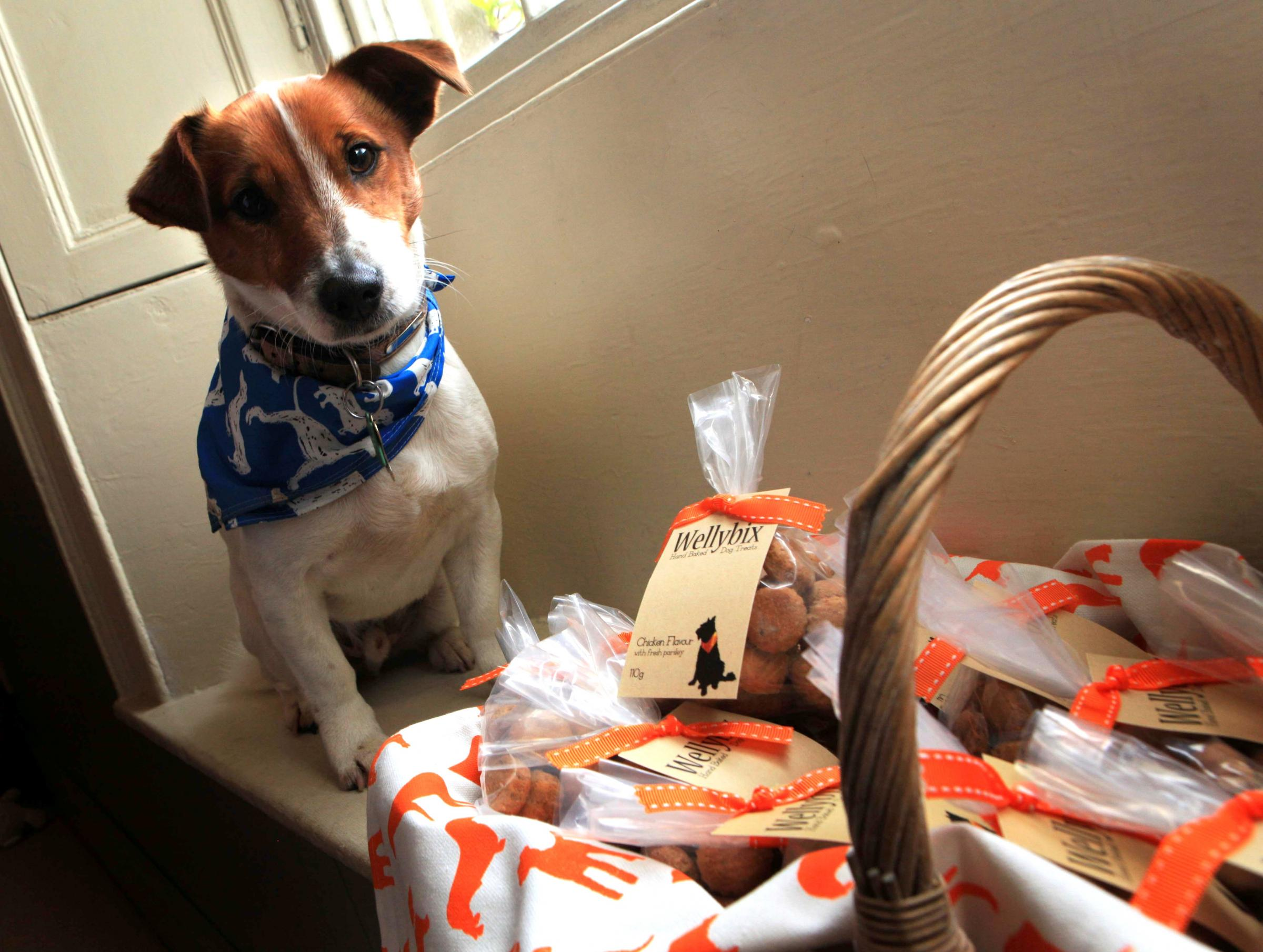 Welly gives home-baked biscuits wag of approval