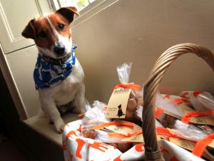 Darlington and Stockton Times: TAKING THE BISCUIT: Alison's dog Welly stands guard over home-baked Wellybix treats