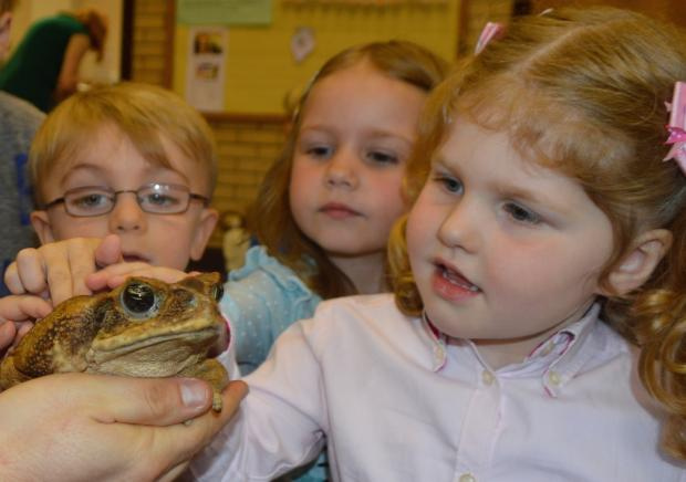 Sheila, a South American Cane Toad, with children at Elm Ridge Pre-School