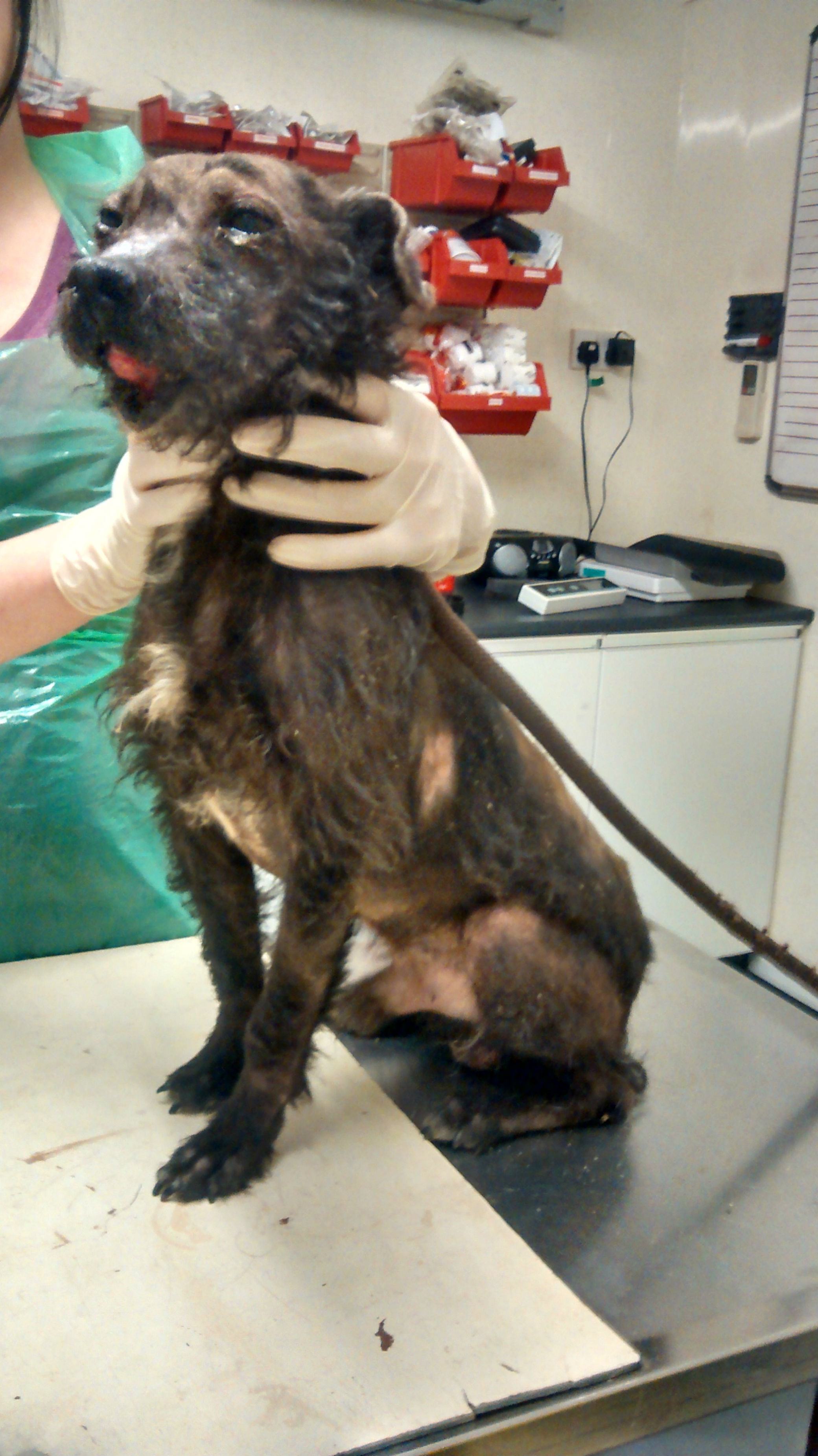 The dog discovered in a severely neglected state near Northallerton