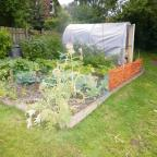 Darlington and Stockton Times: ALLOTMENT CONTEST: Allotment holders are being encouraged to take part in annual competition