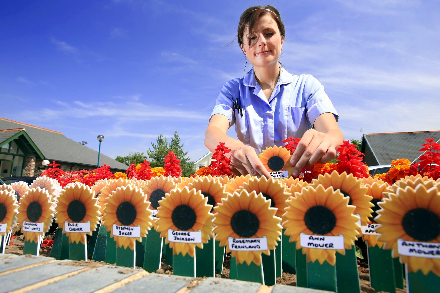 Sunflower appeal to celebrate a loved one's memory