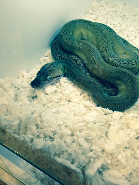 Reptile rescue expert's warning over exotic pet ownership