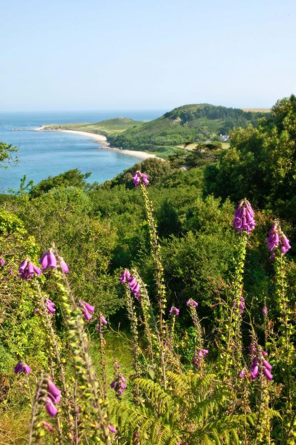 WILD WONDERLAND: Guernsey has 41 miles of coastline to discover and an average 1,950 hours of sunshine per year