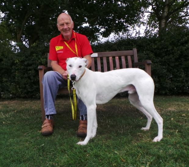 IN NEED: Nelson, a 16-month-old lurcher, pictured with Dogs Trust volunteer Derek Cornforth