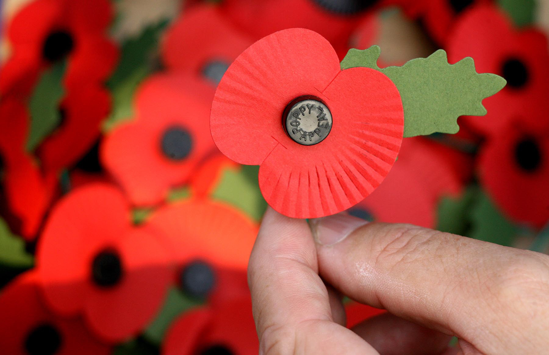 APPEAL: The Ripon Community Poppy Project has been launched