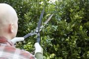 Trim your hedges now and save yourself a job in spring. Picture: PA Photo/thinkstockphotos.