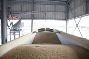 Vivergo to aid farmers in biofuel feed wheat buy-up