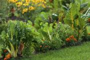 Leafy vegetables and brightly coloured flowers make ideal bedfellows