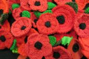 REMEBER THEM: More than 1,000 poppies have been knitted