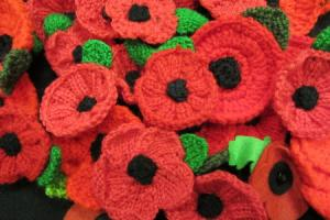 Hundreds of poppies knitted for Darlington's war dead