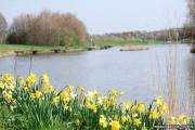 TOXIC: Hemlington Lake in Middlesbrough where a potentially toxic blue-green algae has been found.