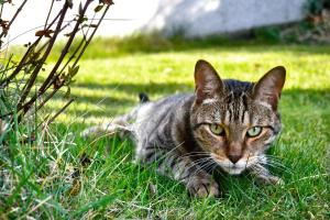 Discover how to keep cats out of your garden