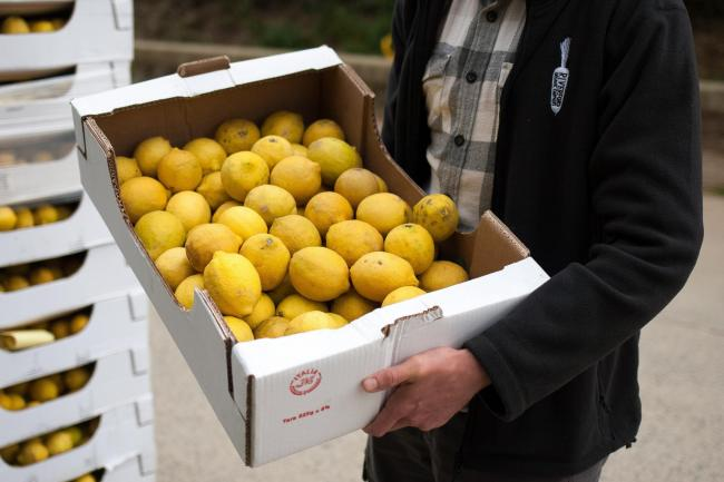 Supermarket rejected lemons at Riverford