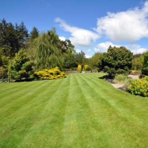Darlington and Stockton Times: How to get the perfect summer lawn