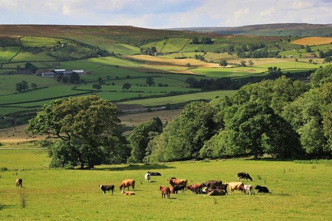 VITAL: The local plan helps protect he countryside