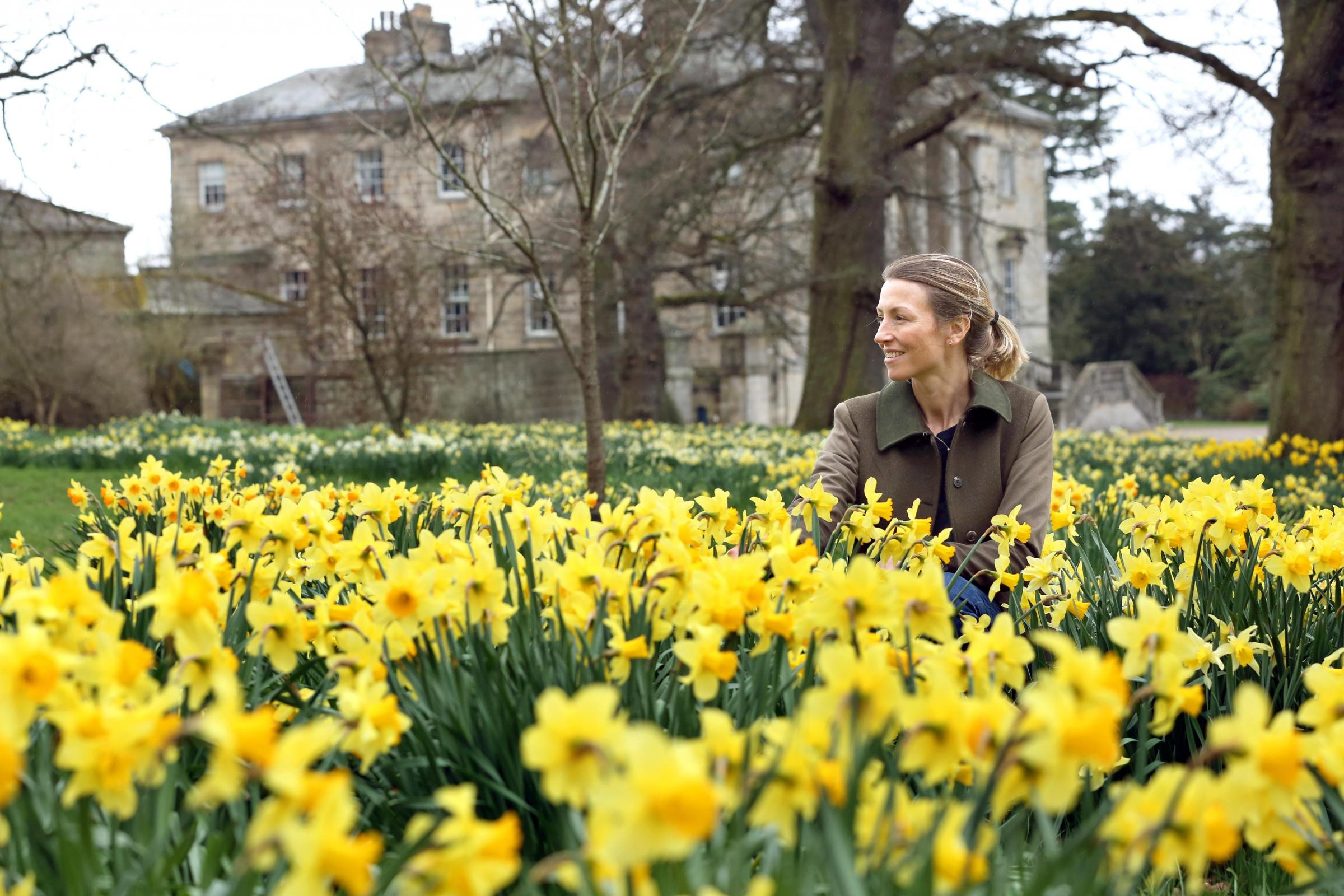 BLOOMS: Imogen Wyvill with the display of daffodils at Constable Burton Hall. Picture: Richard Doughty Photography