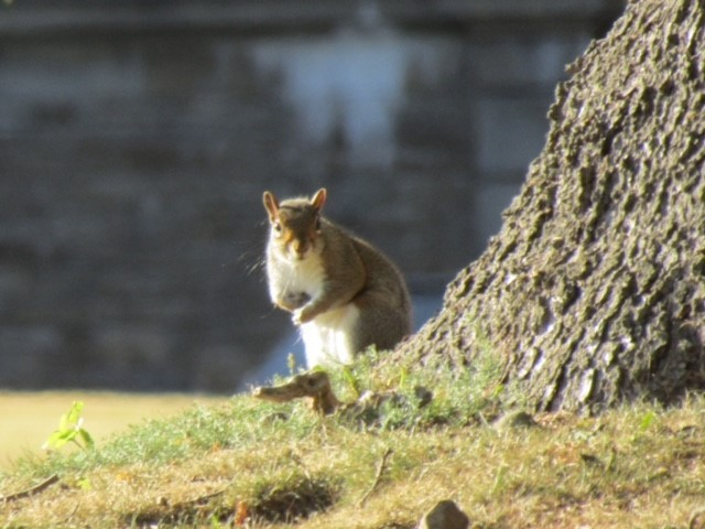 READER'S VIEW: Lindsay Rhoades from Leyburn was very lucky to capture this cheeky little squirrel out enjoying the sunshine during a visit to Wensley Park.
