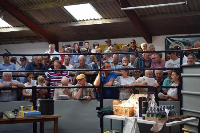 Sale ring of eager bidders at Leyburn Auction Mart's centenary auction of promises