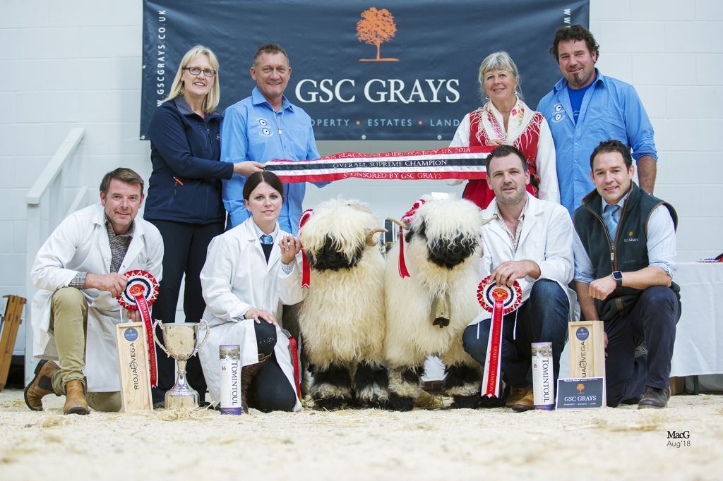 Overall supreme champion, Highland Eric, with Raymond Irvine and Jenni McAllister, at the UK Valais Blacknose Sheep Society's third show