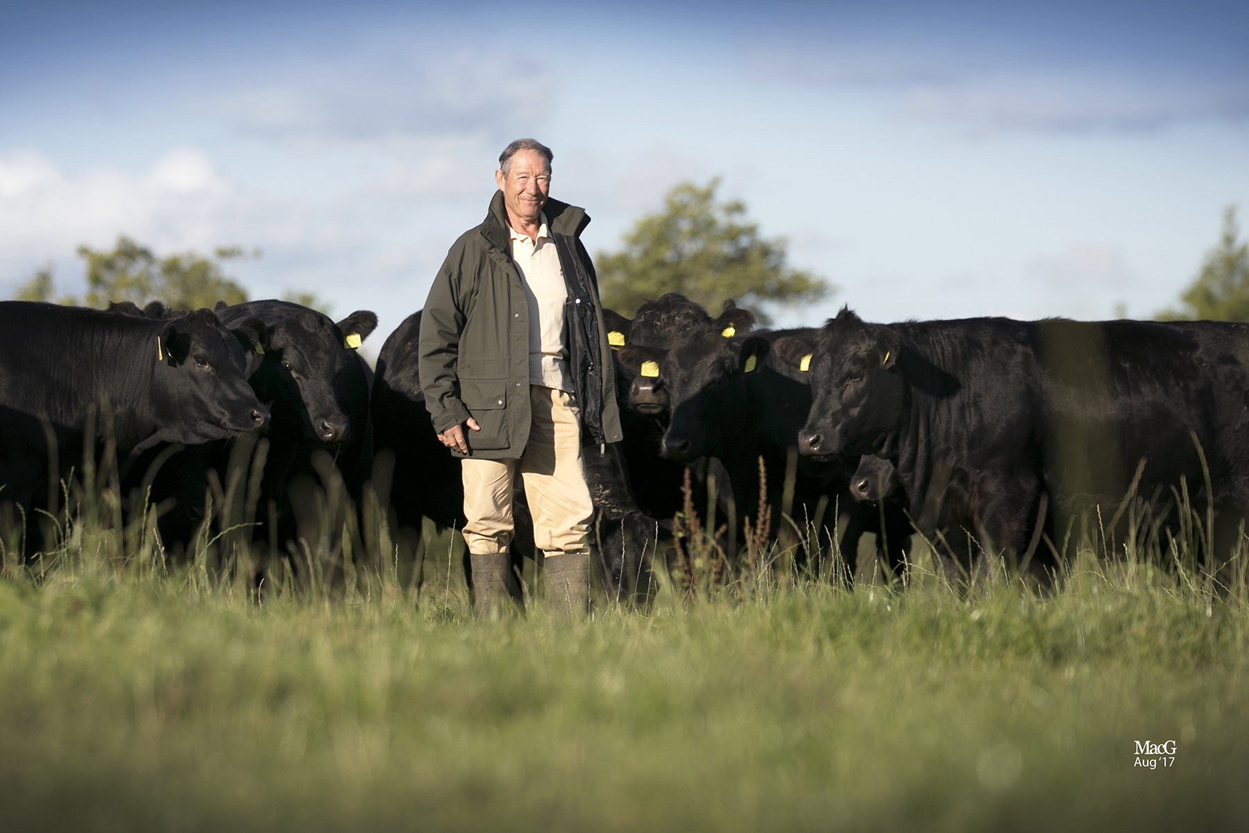 Henry Rowntree with some of his Ribble pedigree Aberdeen Angus herd – Picture: MacGregor Photography