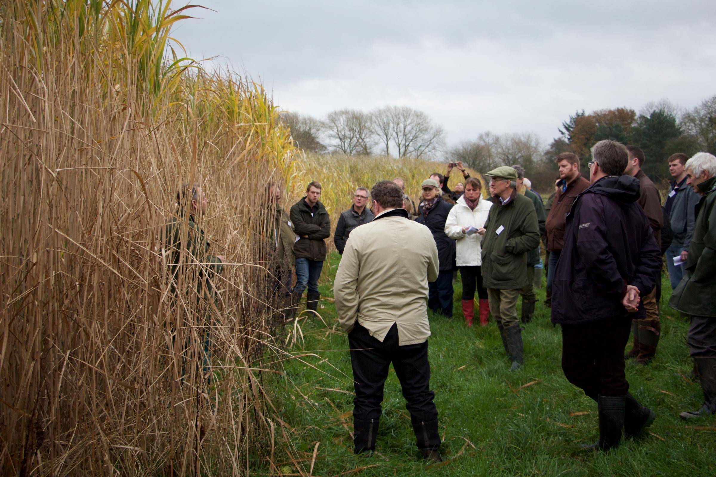 A previous miscanthus walk